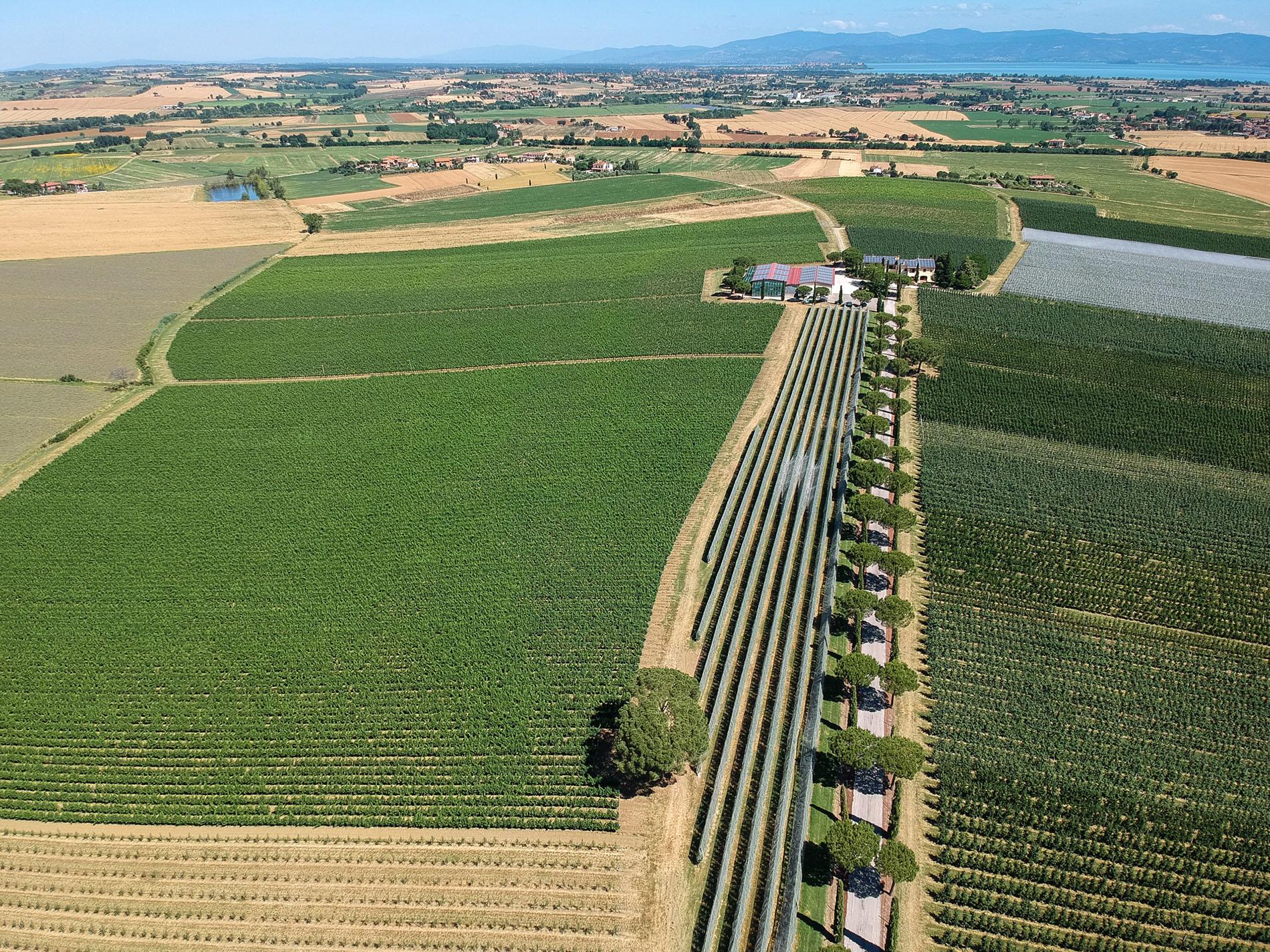 Azienda Agricola Collazzone - La Saporita a Paciano: il frutteto